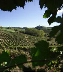 DISCOVER THE GREAT BAROLO WORLD WITH THE SOMMELIER
