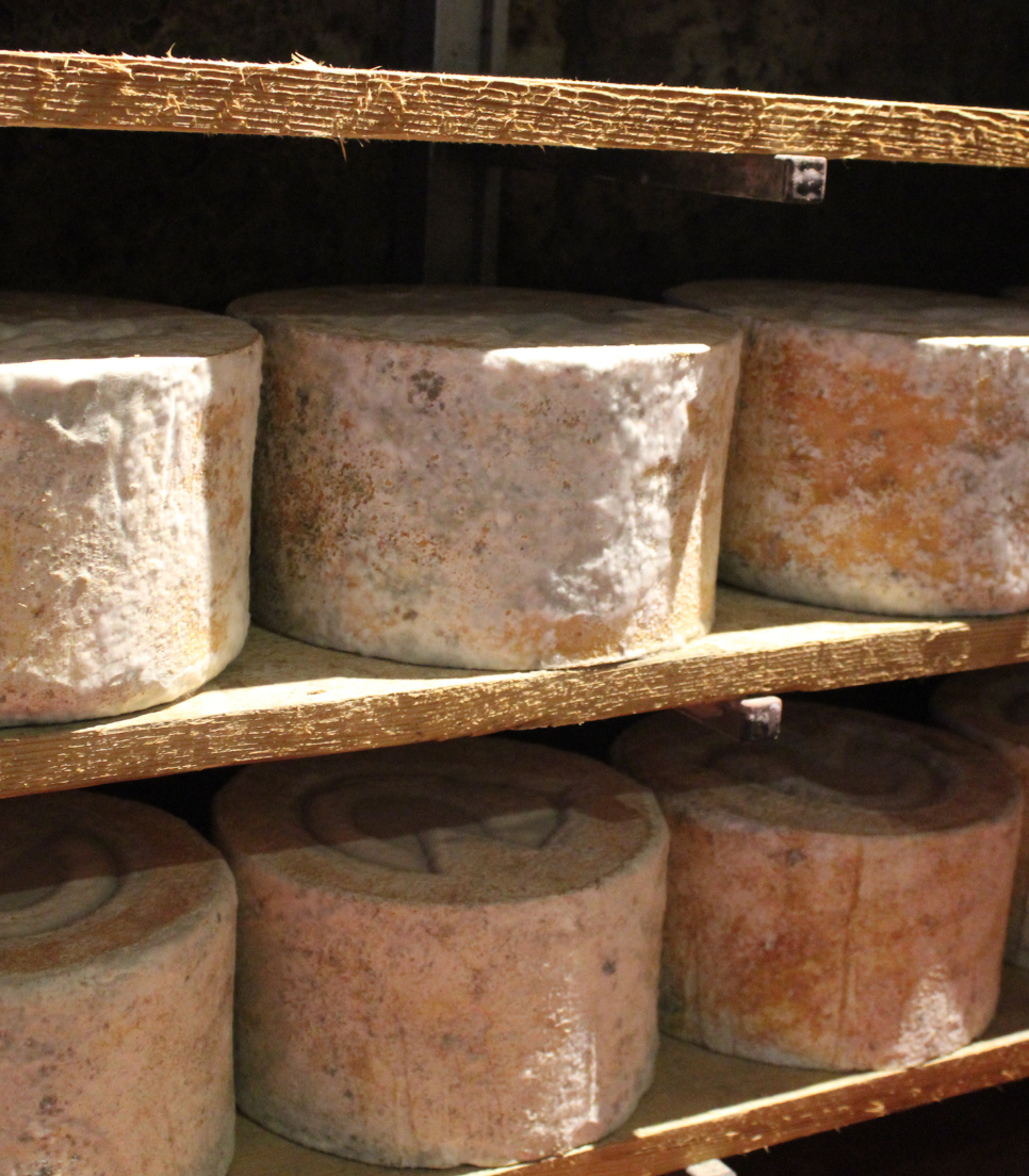 DISCOVERING THE KING CASTELMAGNO